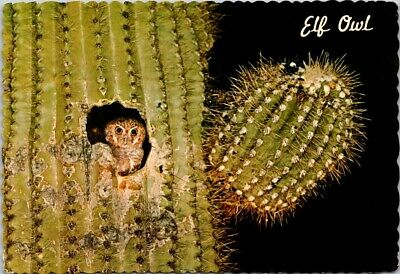 Vintage Postcard Elf Owl Smallest In The World Saguaro Cactus Posted 8 Cents