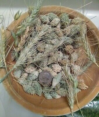Decorative Dried Grass Seed Pods DIY Arts And Crafts Floral