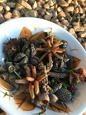 Variety Of Native Australian Nuts. 400 Grams Great For Decoration Or Crafts