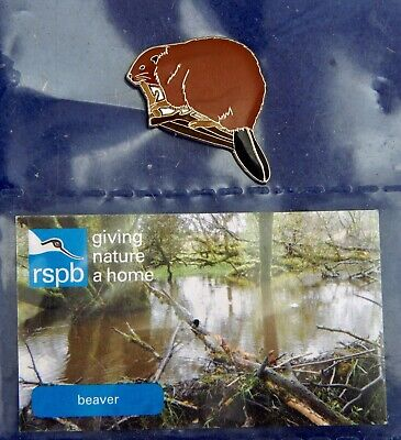 RSPB Pin Badge :- beaver on pictour card GNaH