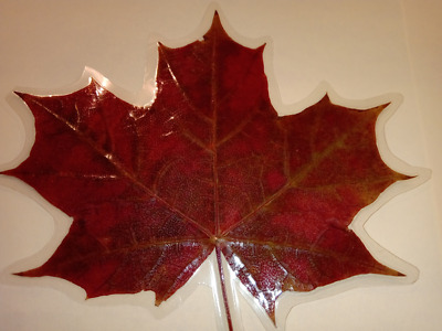 10x Laminated Pressed Red Maple Leaf Bookmark Wedding Table decor Thanksgiving