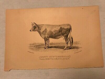 """Jersey Cow """" Cinderilla"""", A. F. Mullin, Mount Holly Springs, Pa. Vintage Sketch"""
