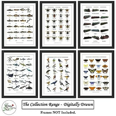 Monstera Print Botanical Leaf Fern Plant Picture Prints Wall Art Size A4 or A3