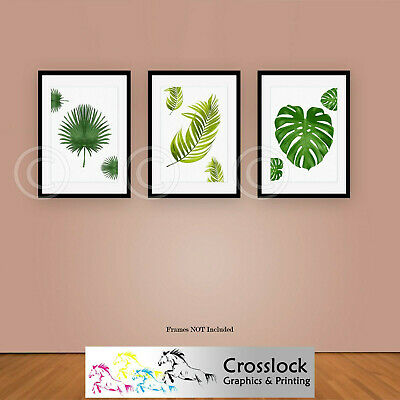 Set of 3 Botanical Monstera Print Leaf Fern Plant Picture Prints ONLY Wall Art