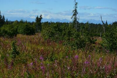 $199 Down - $199/Mo. 5 Acres With Mountain Views, Road & Electric Near Homer Ak!