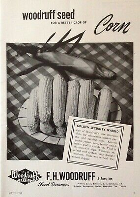1954 Ad(Xe6)~F.h. Woodruff Seed Co. Milford, Conn. Golden Security Hybrid Seed