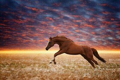 Running Wild Horses Wall Mural Wallpaper WS-42777