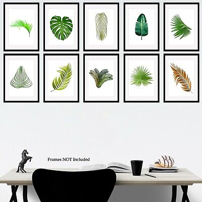 Botanical Prints Monstera Leaf Fern Plant Picture Print Size A5 A4 A3 - 68 Types
