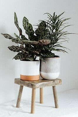 Rustic Wooden plant stool, handmade, unique (Our best selling item)