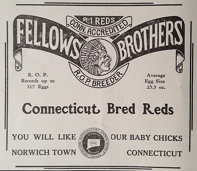 1933 Ad(Xe5)~Fellows Brothers Conn. Bred Reds, Norwich Town, Conn.
