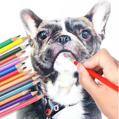 24 Colors Oil Art Pencils Drawing Sketching Artist Adult Non-toxic Coloured UK