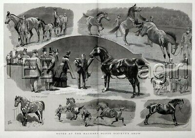HORSE Hackney Horse Show Society 7 Views, Coaching HUGE Antique 1890s Print