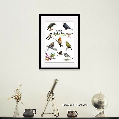 British Garden Birds Print wildlife nature photo poster picture bird prints