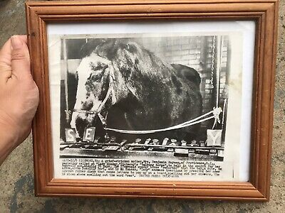 Psychic Horse Lady Wonder Original Photograph Used In American Newspaper