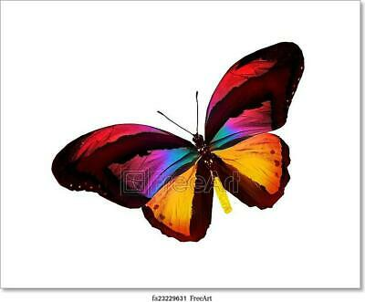Color Butterfly Art/Canvas Print. Poster, Wall Art, Home Decor