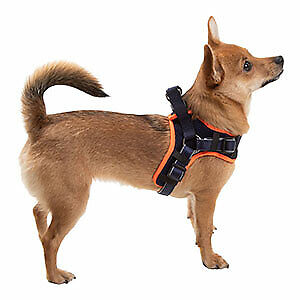 3 Peaks Step in Dog Harness Navy Small - RRP £16
