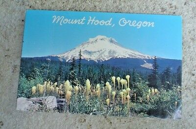 Postcard Vintage Mount Hood, Oregon 11,245 Foot Peak