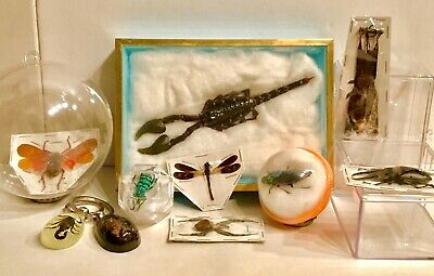 Real Bugs Insects Scorpion Bat Taxidermy Collection Lot (10)