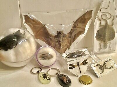 Real Bugs Insects Dragon Bat Taxidermy Collection Lot (9)