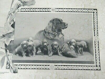 Antique Engraving Proud Irish Setter Mother Dog & Puppies 1869 John A. Lowell&Co