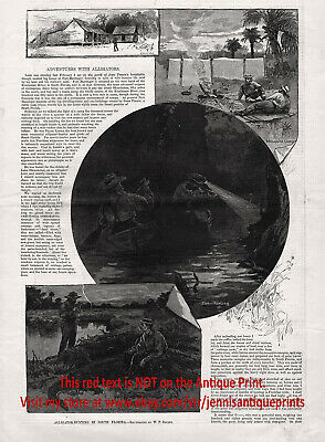 Alligator Hunting in South Florida, Large 1880s Antique Print & Article