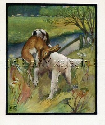 DOG English Setter Hunting, by Artist Edwin Noble, Quality Antique Print