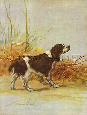 DOG English Springer Spaniel, Beautiful 1930s Color Linen Print by Maud Earl