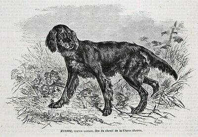 Dog Gordon Setter NAMED Myrrhe & Kennel ID'd, 1870s Antique Engraving Print