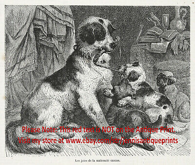 Dog Newfoundland Mother and Puppies, Landseer, 1870s Antique Engraving Print
