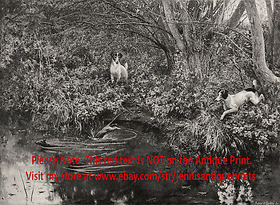 Dog Rat Terriers Hunting Rats in the Forest Stream, 1890s Antique Print