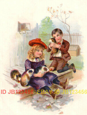 Guinea Pig Pets, Brother & Sister, Antique Color Print