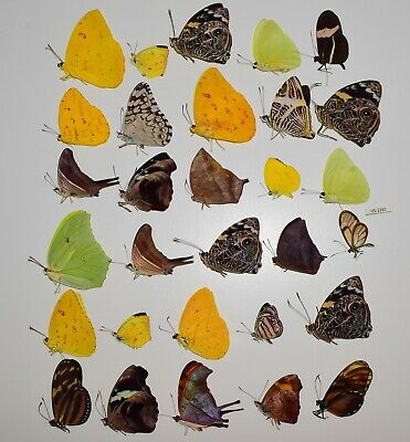 butterflies lot of 30 piece- MEXICO-SEE QUALITY  US-1161