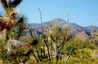 One Acre Of Land In Arizona!! Property Fir Sale