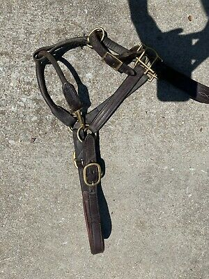Circuit Leather Halter Horse Size