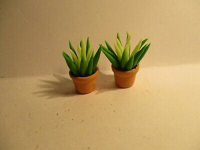 Dolls House miniatura Aloe Vera piantati POT BV99