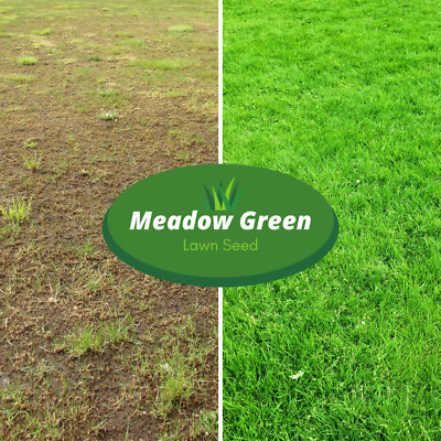 Meadow Green Grass Seed Hard Wearing Lawn Seeds Premium Tough Fast Growing