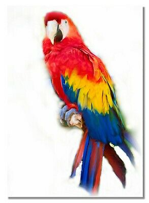 Picture Poster Print Art A0 A1 A2 A3 A4 PARROT BEACH Animal Poster 3668