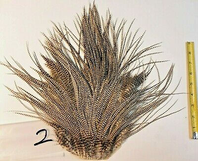 Fly Tying FEATHERS Fishing SETS Barred Grizzly Natural Rooster Hackle MULTIPLES!