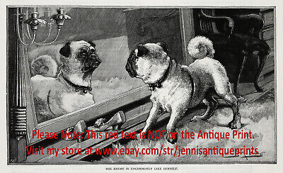Dog Pug Fawn Colored Fighting Mirror, Pair of Two 1890s Antique Prints