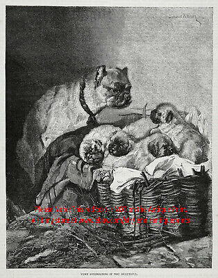 Dog Pug Mother Inspecting Basket with Her Four Puppies, 1890s Antique Print