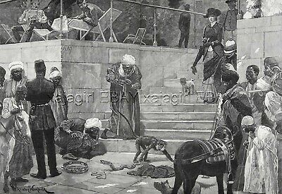 Dog Pug, Snake, Monkey in Cairo Egypt, Huge Double 1880s Antique Print & Article