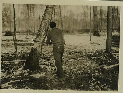 Ww1 Orig Photo - Forest Lumber Worker