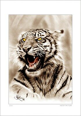 Indian  Sumartran Tiger       Drawing          Limited Edition