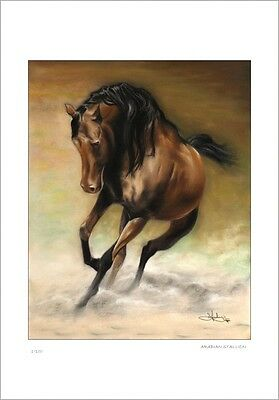 Arabian  Stallion  Horse   Pastel Drawing          Limited Edition