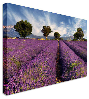 Lavender Field Floral Flower Canvas Wall Art Perfect Pictures Large
