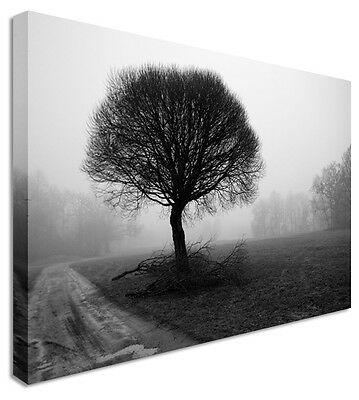 Black & White Tree Floral Flower Canvas Wall Art Picture - Large+ Any Size