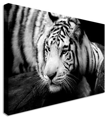 Large Animal Chill Tiger B/&W Canvas Wall Art Pictures