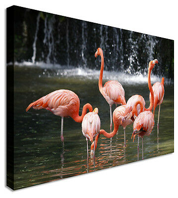 Wall Art Large Animal Flamingo Dance Canvas Pictures