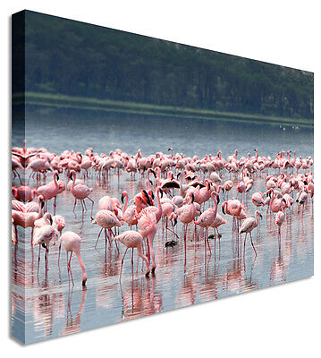 Wall Art Large Animal Flamingo Waterhole Canvas Pictures