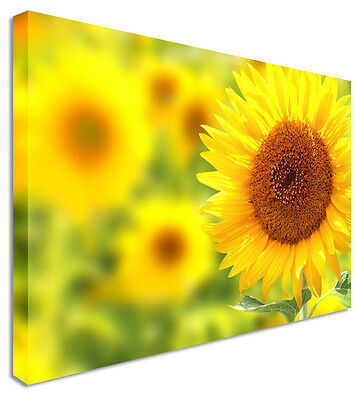 NO FRAME YELLOW FLOWERS SUNFLOWER Modern Canvas Wall Art Picture L473 MATAGA